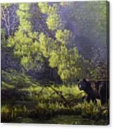 A Sunny Meadow Canvas Print