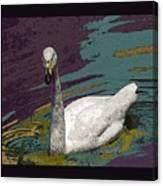A Swan Me A Swan Canvas Print