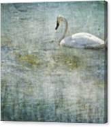 A Swan's Reverie Canvas Print