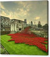 A Sweep Of Poppies  Canvas Print