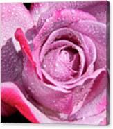 A Sweet Sweet Rose Canvas Print