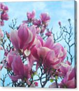 A Symphony Of Magnolia Flowers Canvas Print