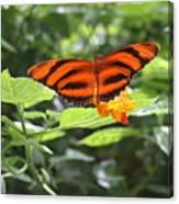 A Tiger Amongst The Petals Canvas Print