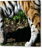 A Tigers Stride Canvas Print