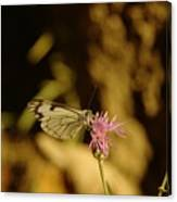 A Tilting Butterfly  Canvas Print