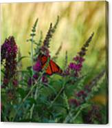 A Touch Of Orange Canvas Print