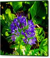A Touch Of Violet Canvas Print