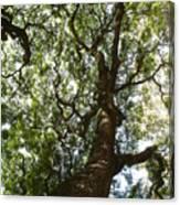 A Tree Canvas Print