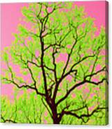 A Tree Grows In Vegas Canvas Print
