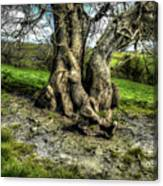 A Tree In A Pool Of Light Canvas Print