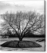 A Tree In Fort Worth Canvas Print