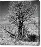 A Tree In The Dry Land Canvas Print