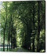 A Tree Lined Path Leads To Mad King Canvas Print