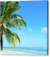 A Tropical Palm Tree Beach Canvas Print