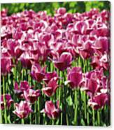 A Tulip Arrangement Canvas Print