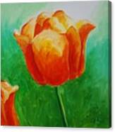 A Tulip For Jolee Canvas Print