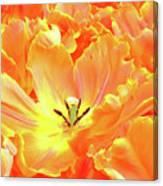A Tulip Fully Open Canvas Print