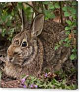 A Very Fine Bunny Resting Under The Lilac Bush Canvas Print