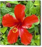A Very Red Flower Canvas Print