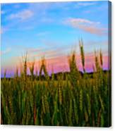 A View From Crop Level Canvas Print