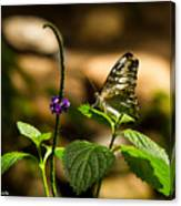 A  View Of A Butterfly Canvas Print