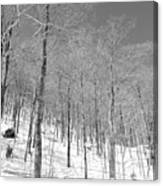 A View Through The Woods Canvas Print