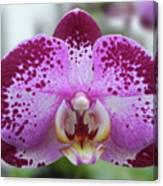 A Violet Orchid Canvas Print