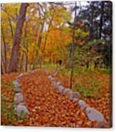 A Walk Along Natures Path Canvas Print