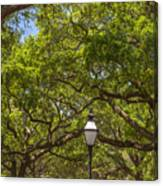 A Walk In The Park Canvas Print