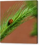 A Walk In The Tall Grass Canvas Print