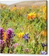 A Walk Though The Poppy Fields Canvas Print
