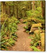 A Walk Through The Rainforest Canvas Print