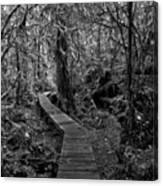 A Walk Through The Willowbrae Rainforest Black And White Canvas Print