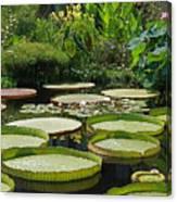 A Water Garden Canvas Print