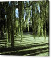 A Weeping Willow Casts Long, Cool Canvas Print