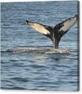 A Whale Of A Tail Bar Harbor Canvas Print