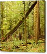 A Whisper In The Rainforest Canvas Print