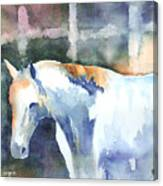 A White Horse Canvas Print