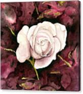 A White Rose Canvas Print