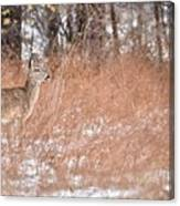 A White-tailed Deer In A Snow Storm Canvas Print