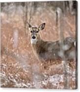 A White-tailed Deer In The Snow Canvas Print
