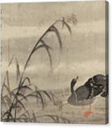 A Wild Goose Canvas Print
