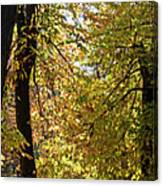 A Window To Fall Canvas Print
