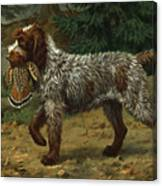 A Wire-haired Pointing Griffon Holds Canvas Print