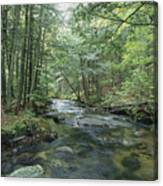 A Woodland View With A Rushing Brook Canvas Print