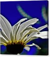 A Worms Eye View Of A Daisy Canvas Print