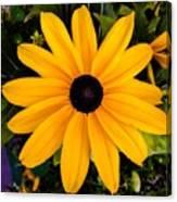 A Yellow Beauty Canvas Print