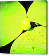 A Yellow Bud Of Waterlily Canvas Print
