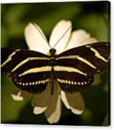 A Zebra-winged Butterfly At The Lincoln Canvas Print