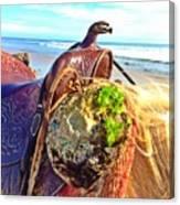 Abalone On Saddle Canvas Print